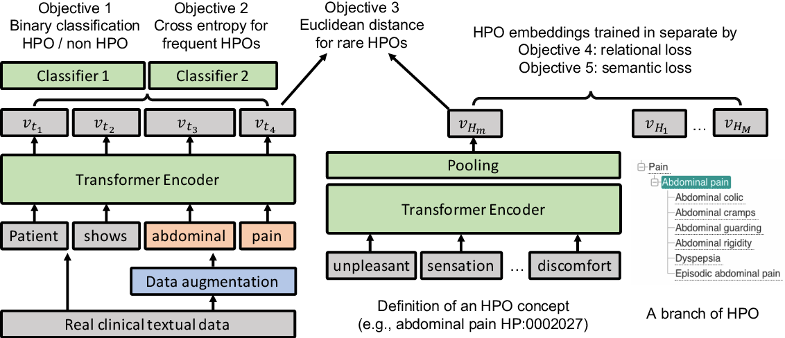 Figure 1 for Self-Supervised Detection of Contextual Synonyms in a Multi-Class Setting: Phenotype Annotation Use Case