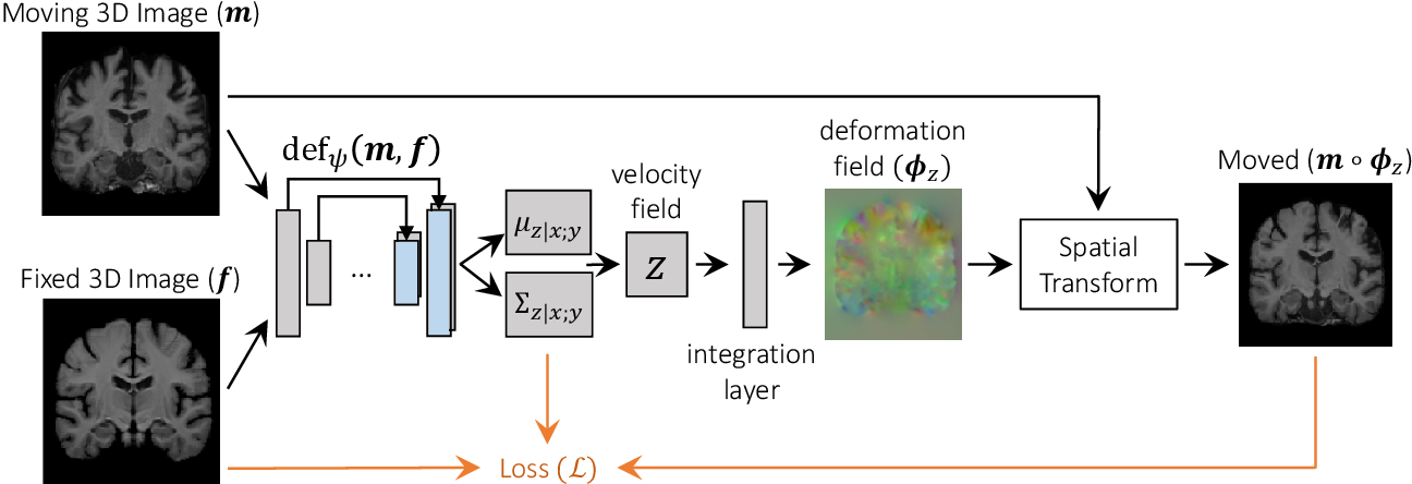 Figure 3 for Unsupervised Learning of Probabilistic Diffeomorphic Registration for Images and Surfaces
