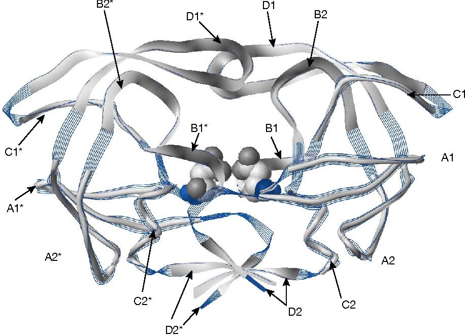 Figure 4 from 9 Anatomy and pathology of HIV-1 peptidase - Semantic ...