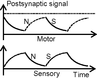 Figure 1 for Motor Learning Mechanism on the Neuron Scale