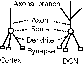 Figure 2 for Motor Learning Mechanism on the Neuron Scale