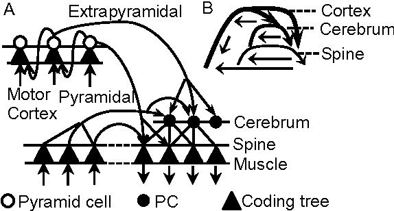 Figure 4 for Motor Learning Mechanism on the Neuron Scale