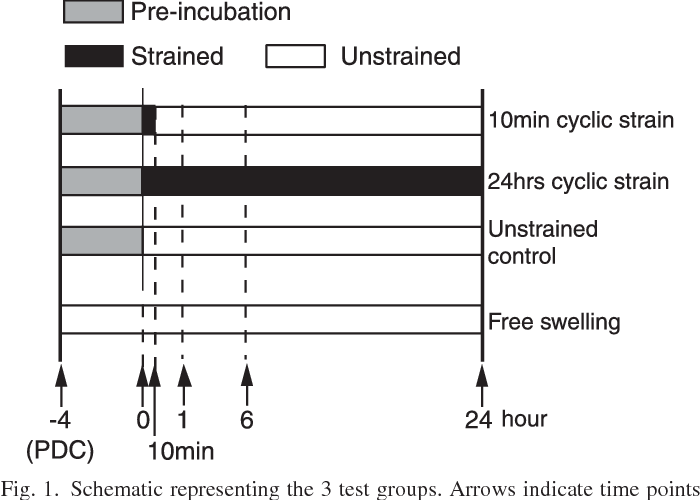 Fig. 1. Schematic representing the 3 test groups. Arrows indicate time points of the sample collection for subsequent gene expression analysis. PDC, postdissection controls.