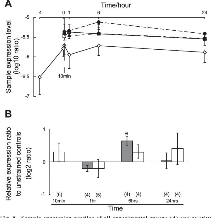Fig. 5. Sample expression profiles of all experimental groups (A) and relative expression ratio of strained fascicles to unstrained controls (B) for TGF 1. Symbols in A represent data of each group as follows: {, free swelling; , unstrained control; Œ, 10-min cyclic strain regime; F, 24-h cyclic strain regime. In B, grey and open bars indicate 10-min and 24-h cyclic strain regimes, respectively. Data are presented as means SD in sample expression profiles and means SE in relative expression ratio. Result of statistical analysis is indicated as follows: *P 0.05 to unstrained controls. Numbers of experiments are indicated in parentheses.
