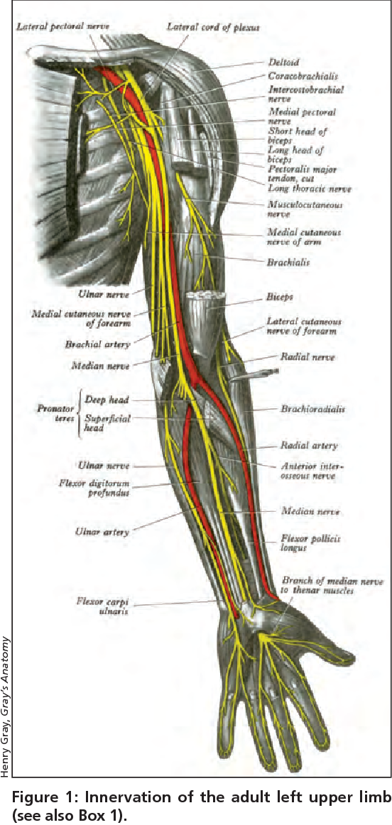Figure 1 from Radial nerve palsy in the newborn. - Semantic Scholar