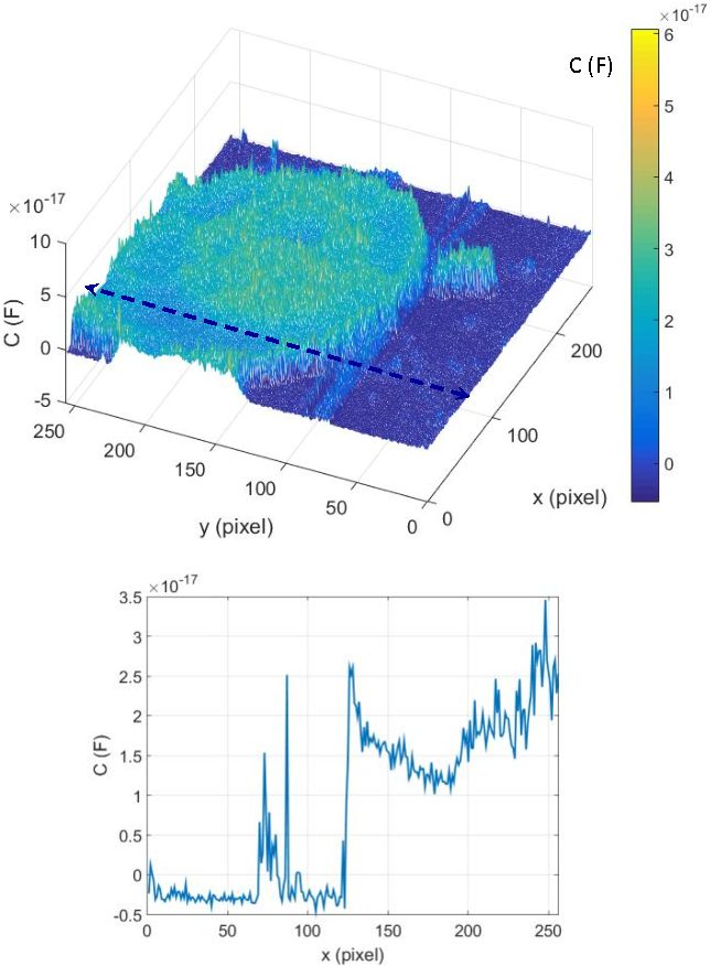 Fig. 1. Top: SMM images of MCF-7 cells without fullerene treatment at f = 20.37 GHz; down: line-plot corresponding to the dashed line of the upper surface-plot.