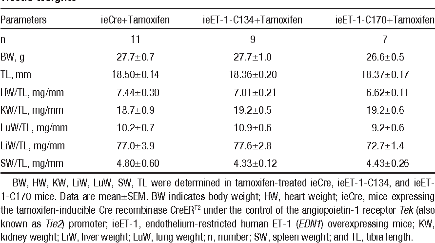 Table 1. Induction of ET-1 Overexpression in the Endothelium Did Not Alter Body or Tissue Weights