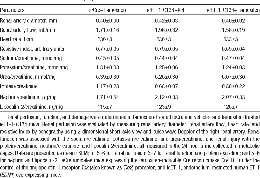 Table 3. Induction of ET-1 Overexpression in the Endothelium Did Not Affect Renal Perfusion and Function or Cause Renal Injury