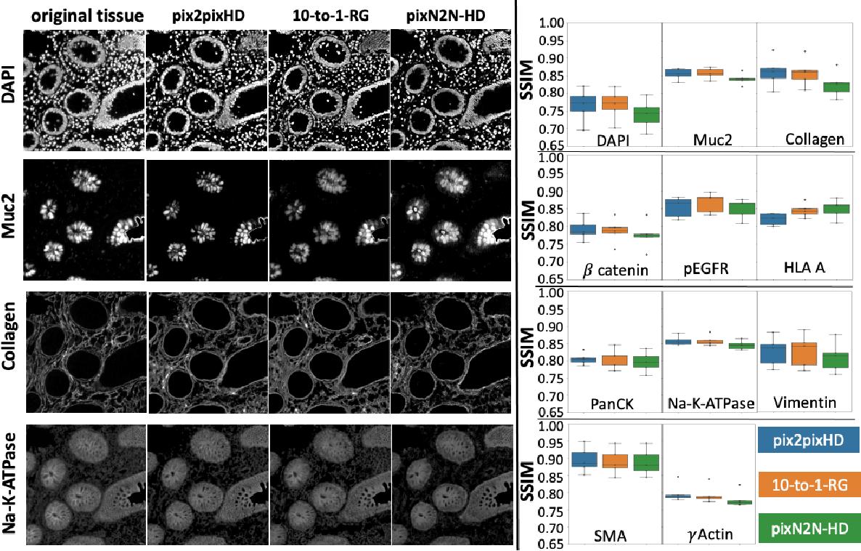 Figure 3 for Random Multi-Channel Image Synthesis for Multiplexed Immunofluorescence Imaging