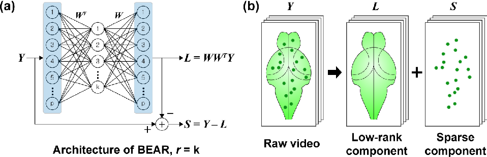 Figure 1 for Efficient Neural Network Approximation of Robust PCA for Automated Analysis of Calcium Imaging Data