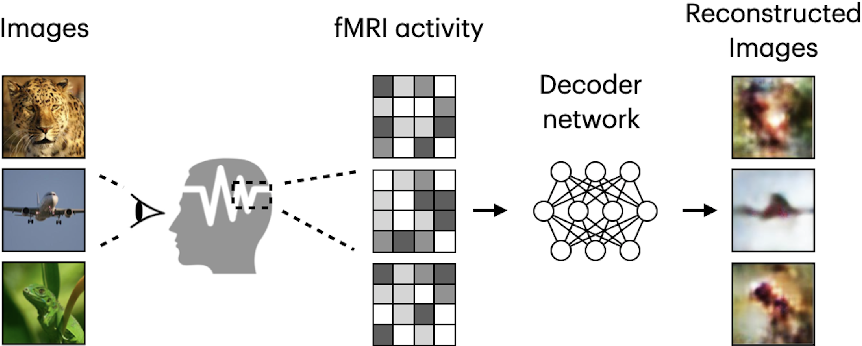 Figure 1 for Natural Image Reconstruction from fMRI using Deep Learning: A Survey