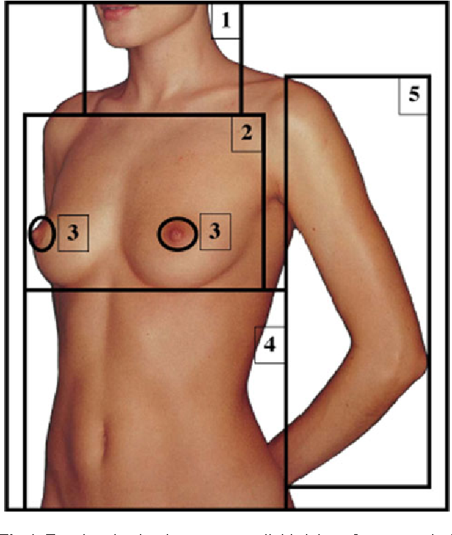 Figure 1 from Eye tracking of men\'s preferences for female breast ...