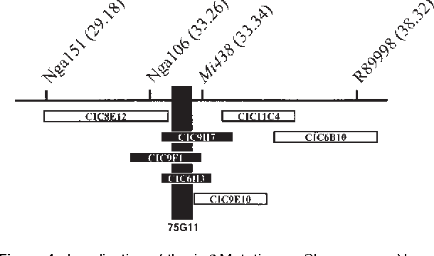 Secondary cell wall semantic scholar figure 1 ccuart Choice Image