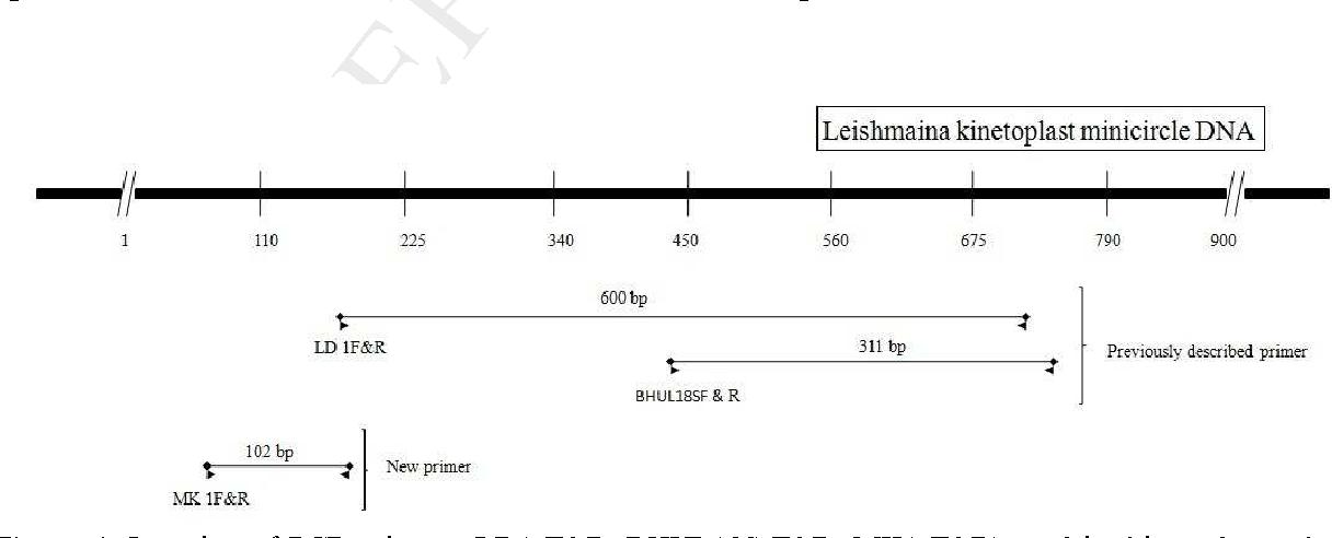 Figure 1 from Novel PCR primers to diagnose visceral