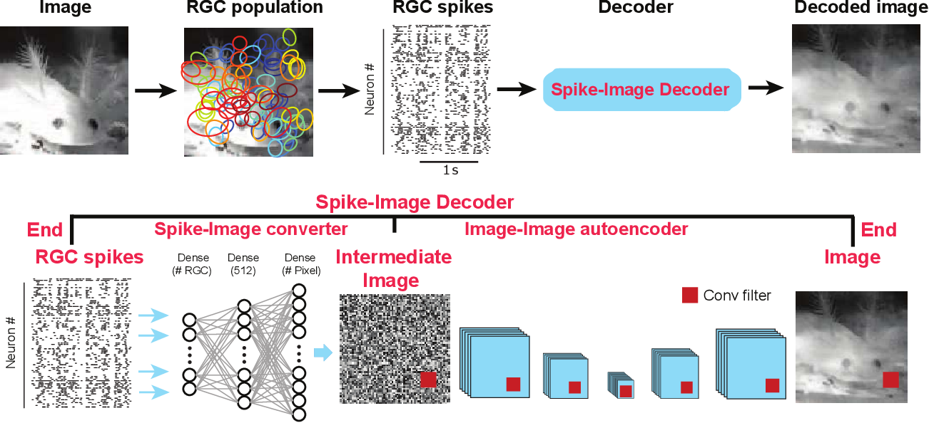 Figure 1 for Reconstruction of Natural Visual Scenes from Neural Spikes with Deep Neural Networks