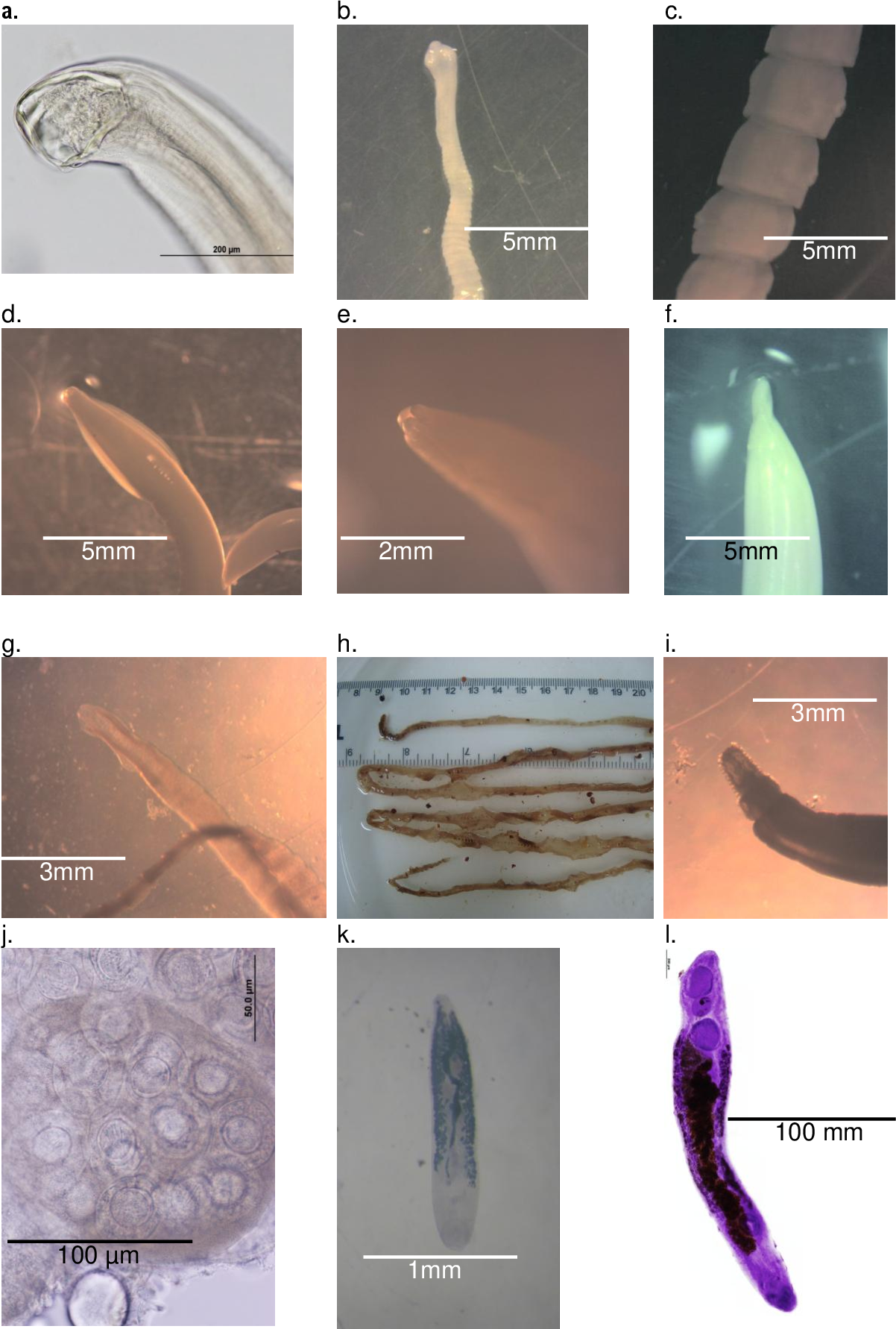 Figure 3-1 from Gastro-intestinal parasites of red foxes