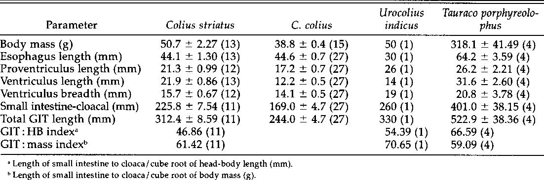 Table 1 Body And Gut Dimensions Of Colius Striatus C Urocolius