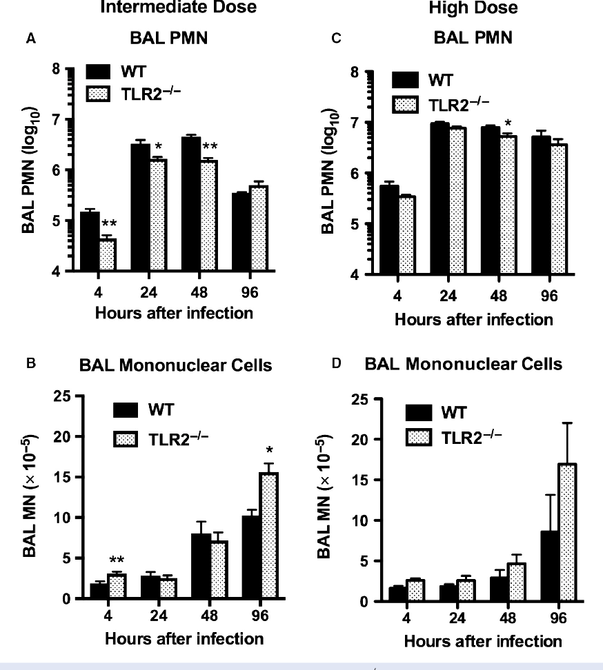 Figure 2. Reduced neutrophil response to inhaled Staphylococcus aureus in TLR2 / mice. Bronchoalveolar lavage (BAL) neutrophils (PMN) and mononuclear cells (MN) were determined at serial time points after inhalation of S. aureus at two different inocula: 4.5 9 106 CFU/lung (intermediate dose; A, B), or 1.4 9 107 CFU/lung (high dose; C, D). Data are mean SEM, n = 8, except for 48 h after intermediate dose and 4 h after high dose where n = 4; and represent the combined results of two separate experiments at each inoculum. *P < 0.05 versus WT; **P < 0.005 versus WT.
