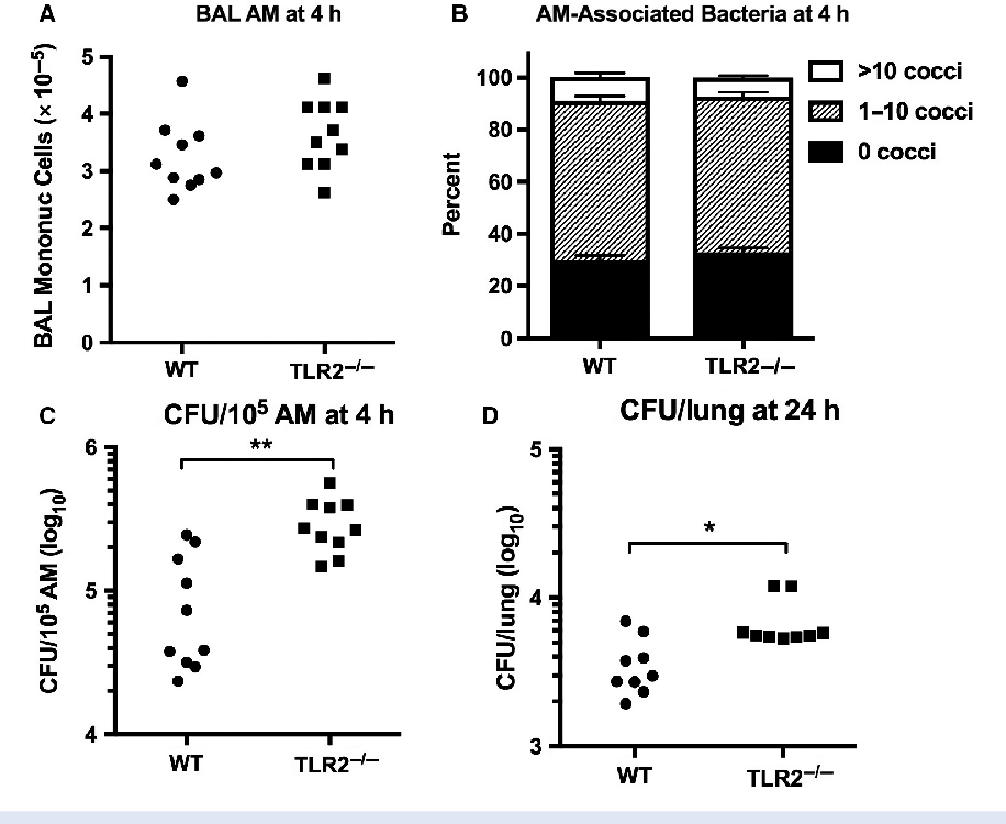 Figure 6. Increased viability of Staphylococcus aureus ingested by TLR2-deficient alveolar macrophages (AM) in vivo. Bronchoalveolar cells (≥99% AM) were harvested 4 h after low-dose airborne infection with S. aureus (deposition 4.3 9 105 CFU/lung) (A). Cytocentrifuge samples were scored for the number of cell-associated bacteria (B, mean SEM, n = 10). The cell pellets were lysed and quantitatively cultured (C). Lung homogenates were cultured 24 h after low-dose infection (D). Data represent the combined results of two independent experiments. *P < 0.05; **P < 0.005.