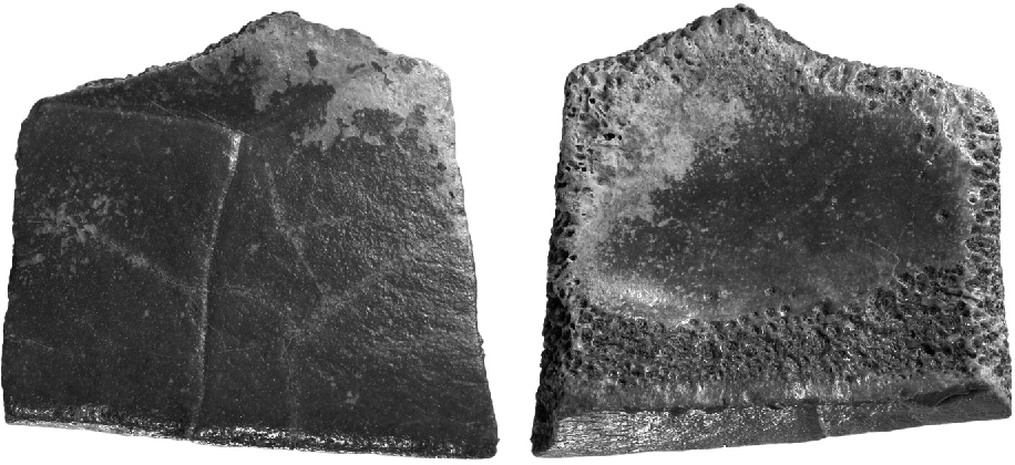 Figure 2 from Turtle shell remains (Testudines