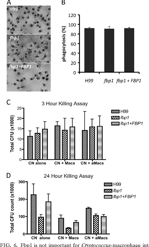 PDF] The F-Box protein Fbp1 regulates sexual reproduction