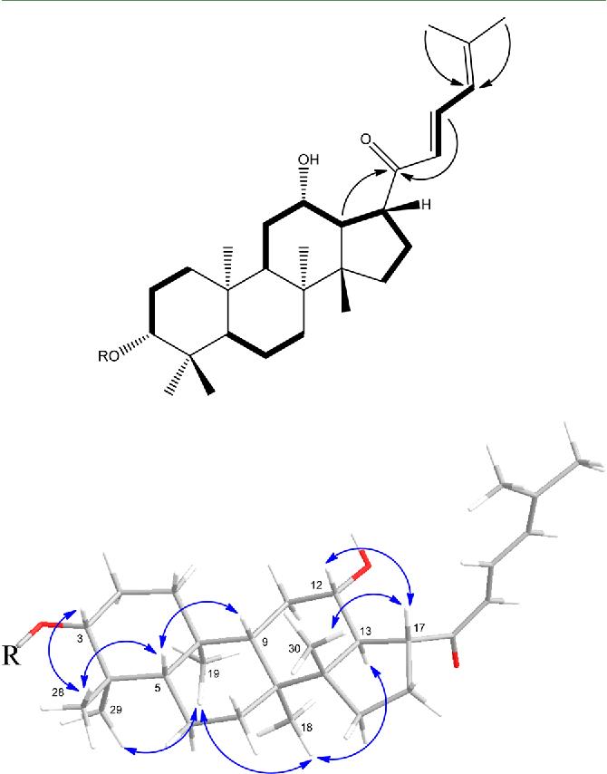Figure 2 From Two Novel Anti Inflammatory 21 Nordammarane Saponins