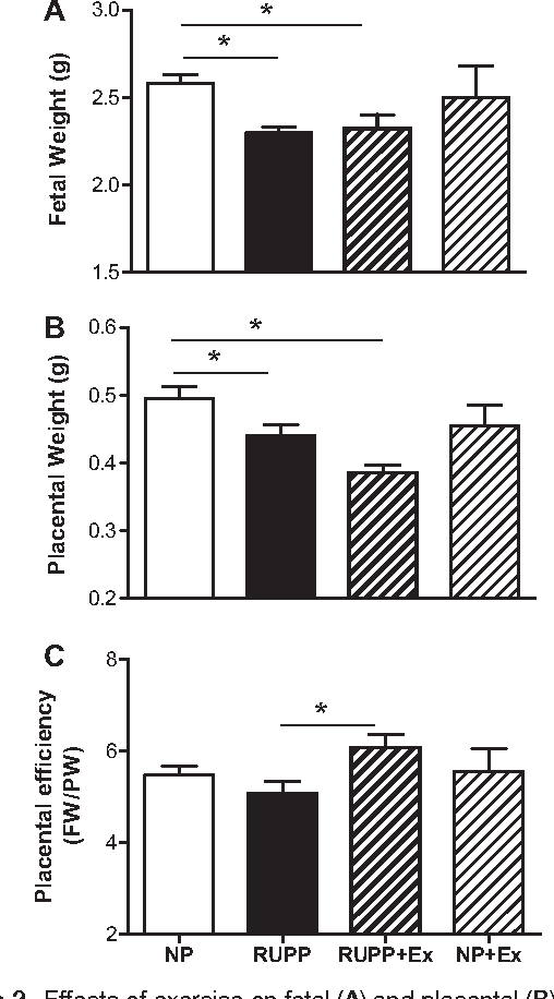 Figure 2. Effects of exercise on fetal (A) and placental (B) weights and placental efficiency (fetal weight/placental weight; C). Fetal and placental weights were decreased in the reduced uterine perfusion pressure (RUPP) vs normal pregnant (NP) rats. Exercise had no effect on fetal weight in either the RUPP or NP rats. Exercise decreased placental weight in the RUPP rats but had no effect in the NP rats. Placental efficiency was increased (P<0.05) in the RUPP+exercise (Ex) group vs the RUPP group. Data are expressed as mean±SEM. Statistical significance for comparisons that are different by post hoc testing are indicated by lines above the bars. *P<0.05.