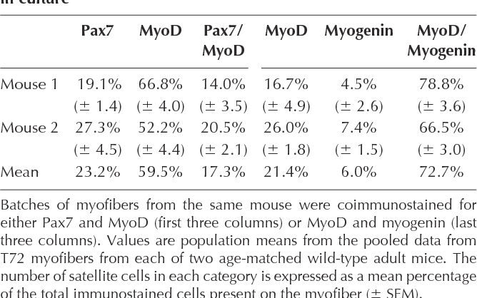 Table I. Pax7 ve/MyoD ve satellite cell progeny appear by 72 h in culture