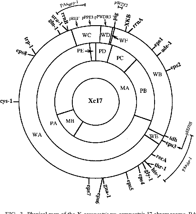 Figure 3 From Chromosome Map Of Xanthomonas Campestris Pv