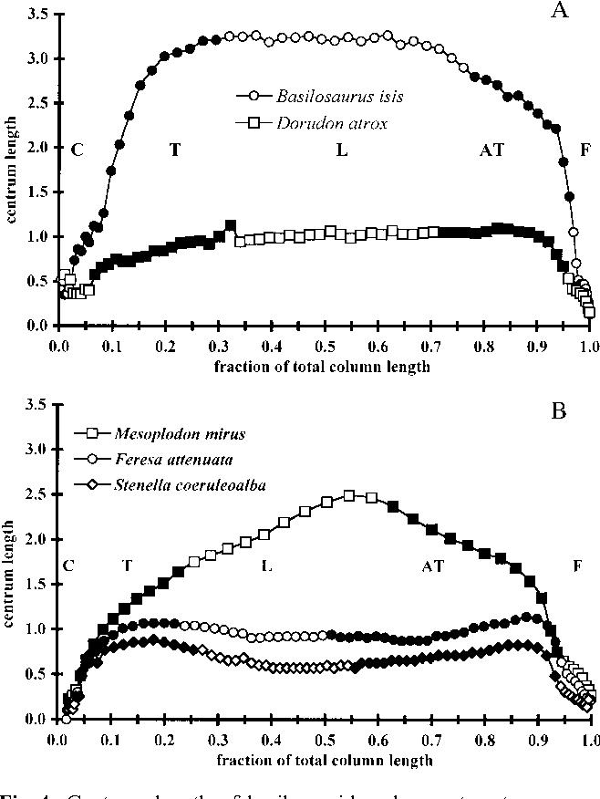 Figure 4 From Modular Evolution Of The Cetacean Vertebral Column
