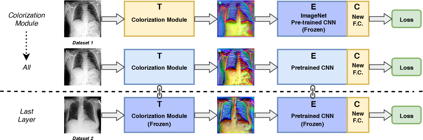 Figure 1 for Bridging the gap between Natural and Medical Images through Deep Colorization