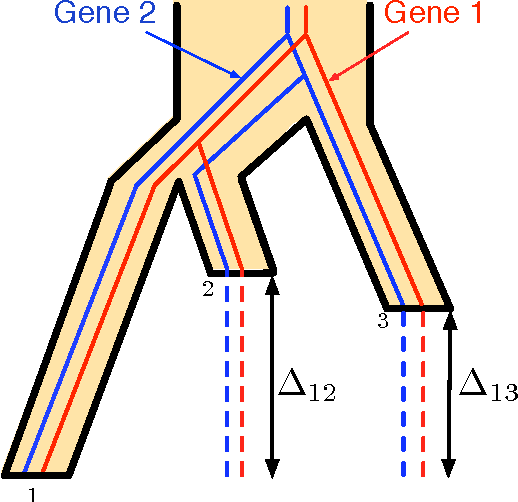 Figure 4 for Coalescent-based species tree estimation: a stochastic Farris transform