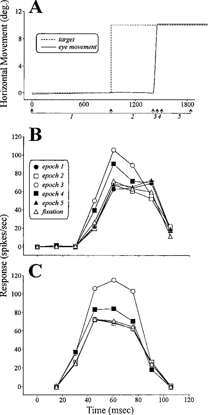 The Effects Of Saccadic Eye Movements On Activity Geniculate Relay Neuron Diagram Figure 1