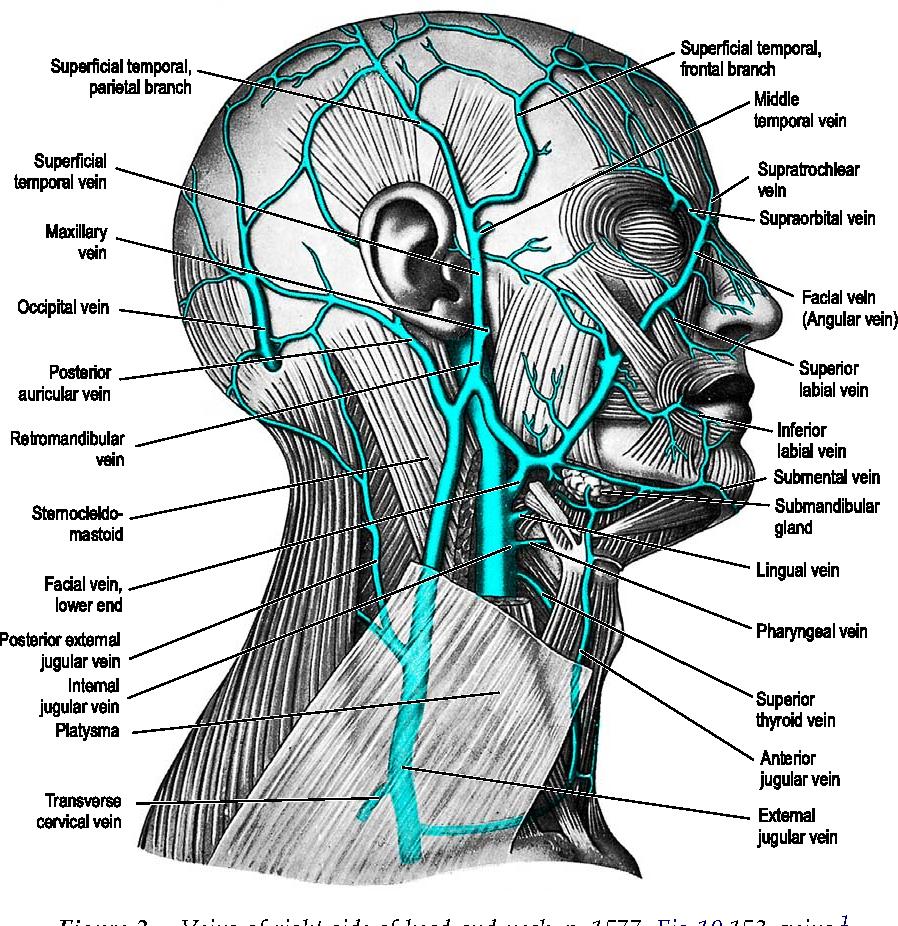 Figure 5 from Facial anatomy. - Semantic Scholar