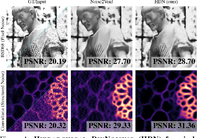 Figure 1 for Removing Pixel Noises and Spatial Artifacts with Generative Diversity Denoising Methods