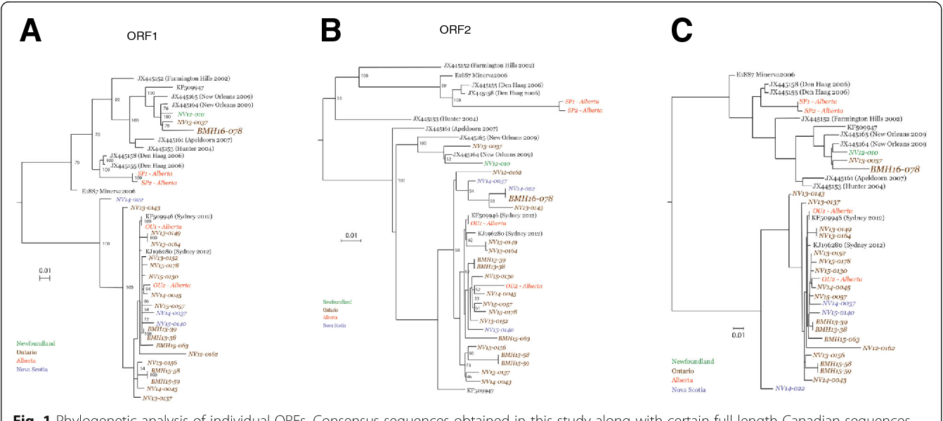 Figure 1 from Genetic characterization of norovirus GII 4 variants