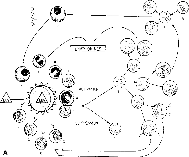 Figure 1 From Hodgkins Disease And Anergy