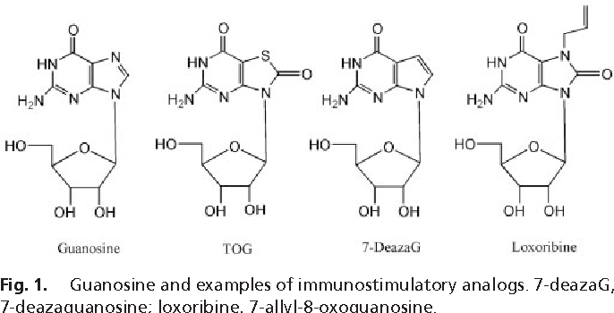 Guanosine And Examples Of Immunostimulatory Analogs 7 DeazaG