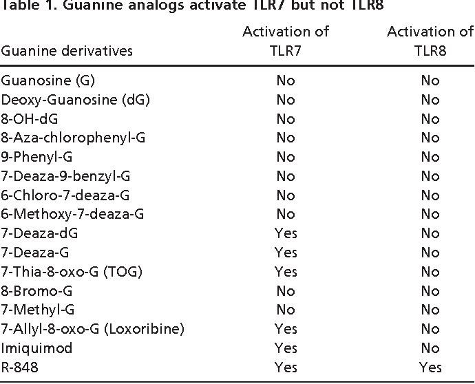 Guanine Analogs Activate TLR7 But Not TLR8