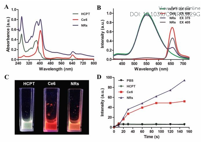 Figure 2. (A) The UV-vis spectra and (B) the fluorescence spectra of HCPT、Ce6、 HCPT/Ce6 NRs. (C) Fluorescence image of HCPT, Ce6 and HCPT/Ce6 NRs aqueous solutions. (D) Plots of the changes of fluorescence intensity at the characteristic peak of SOSG (530 nm) against laser irradiation time. The SOSG was dissolved in water containing 2% methanol with the final concentration of 2 μM.