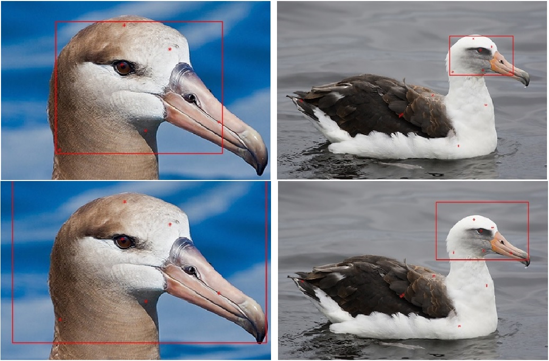 Figure 3 for Fine-grained visual recognition with salient feature detection
