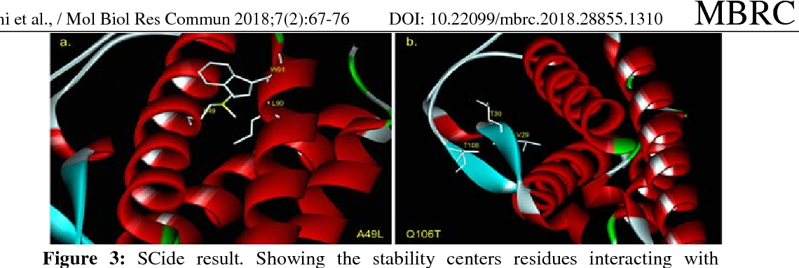 Figure 3: SCide result. Showing the stability centers residues interacting with mutants.3a.) mutant A49L interacting with L90 and W91. 3b) mutant Q106T interacting with V29 and T30.