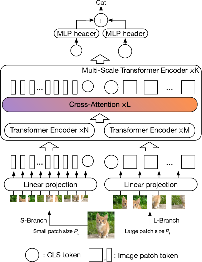 Figure 3 for CrossViT: Cross-Attention Multi-Scale Vision Transformer for Image Classification