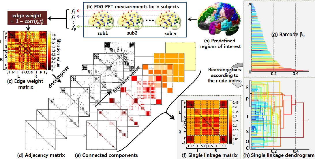 Neuronal Barcodes Shape Complex Networks In The Brain >> Figure 1 From Weighted Functional Brain Network Modeling Via Network