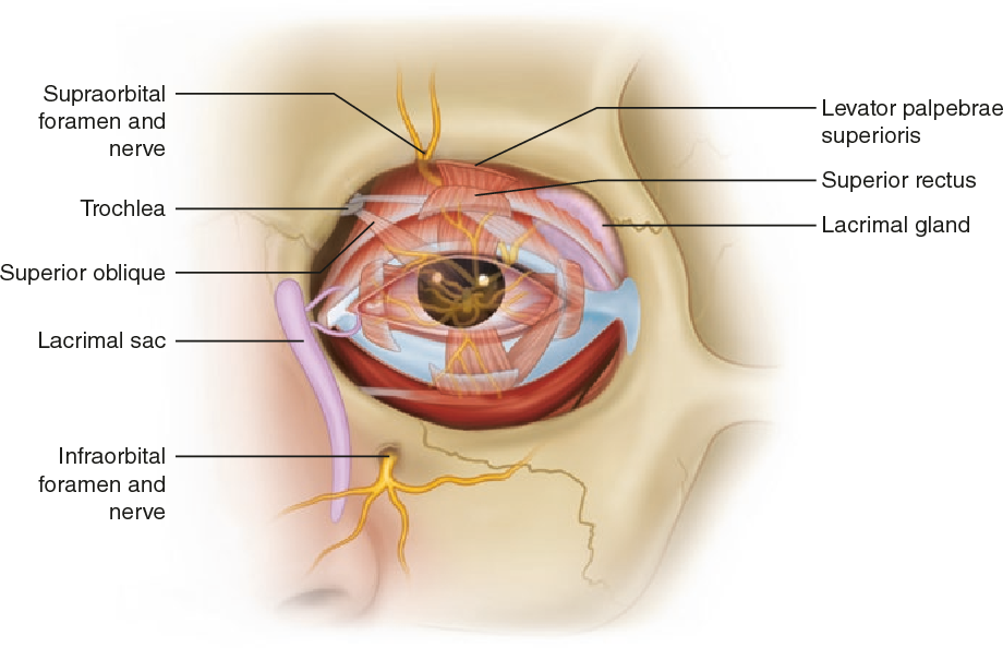 A Case-Based Guide to Eye Pain - Semantic Scholar