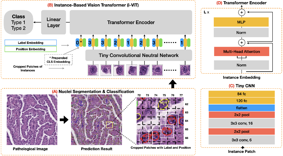 Figure 3 for Instance-based Vision Transformer for Subtyping of Papillary Renal Cell Carcinoma in Histopathological Image