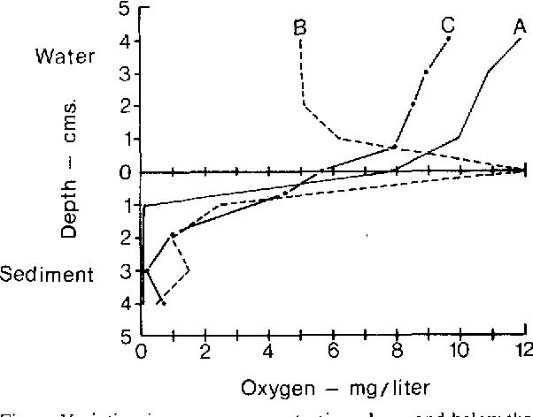 Figure 2 from Further observations on Coelomomyces (Blastocladiales
