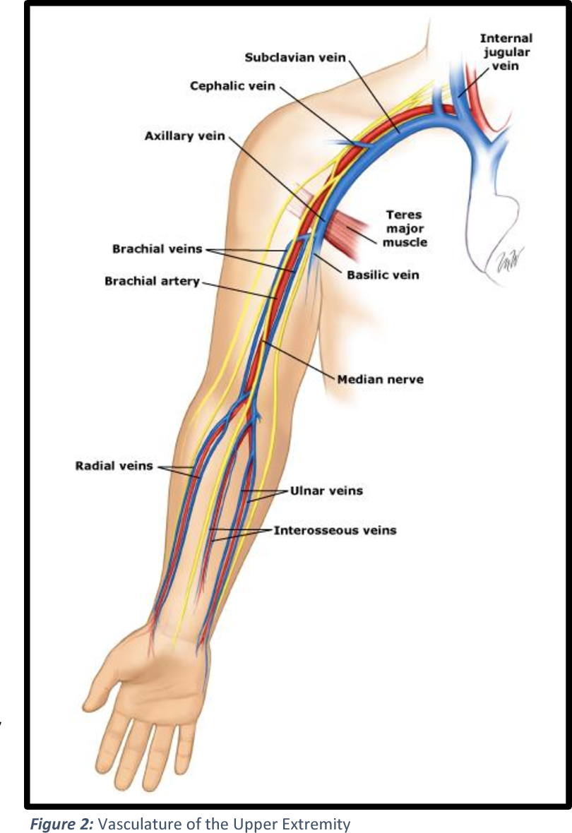 Primary deep vein thrombosis of the upper extremity]. - Semantic Scholar