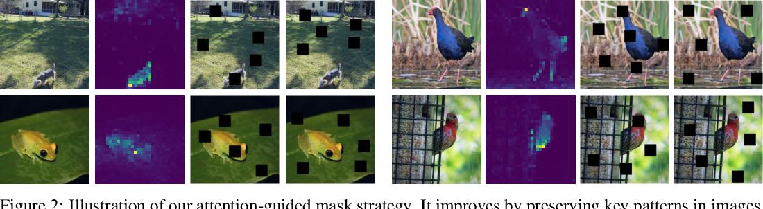 Figure 3 for MST: Masked Self-Supervised Transformer for Visual Representation