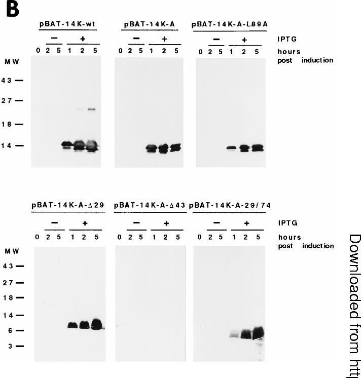 Figure 1 from The vaccinia virus 14-kilodalton (A27L) fusion protein